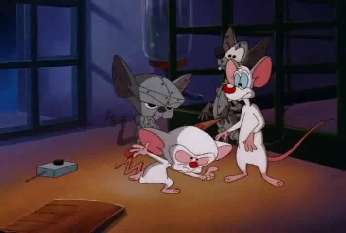 Watch pinky and the brain season 4 episode 6 the pinky and the brain watch pinky and the brain season 4 episode 6 the pinky and the brain reunion special online pinky and the brain thecheapjerseys Images