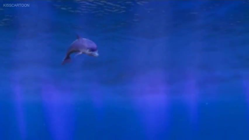 the dolphin story of a dreamer